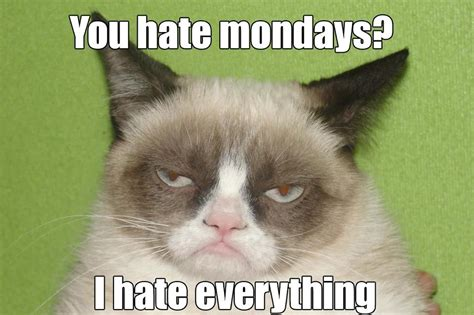 Grumpy Cat Monday Meme - grumpy cat mondays entertain me pinterest