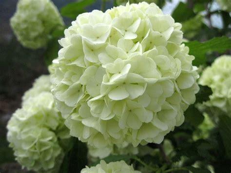 fiori da giardino foto fiori da giardino giardinaggio fiori per il giardino