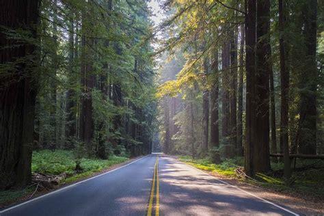 navarro river redwoods state park