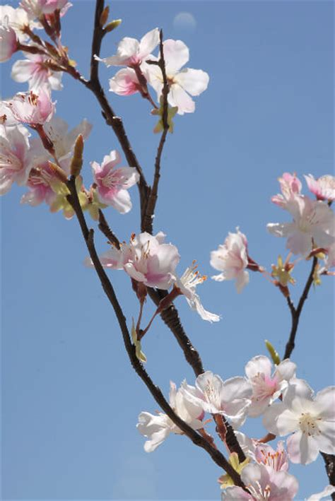 tall silk pink cherry blossom branches 42in