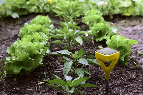 the smart garden edyn smart garden the solar powered garden of the future