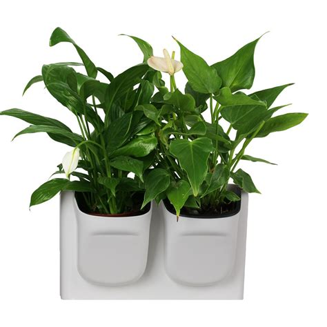 decorative indoor plants planters extraordinary indoor decorative plant pots