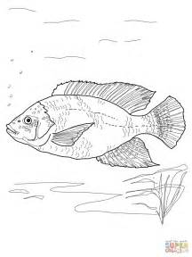 walleye fish coloring pages