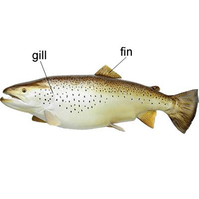 fin   meaning of fin in longman dictionary of contemporary