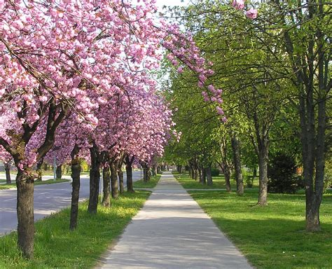 spring is here it s so beautiful outside welldone blog
