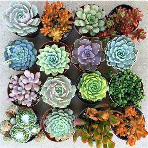succulents plants why you re still killing your succulents and other low