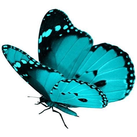 turquoise clipart beautiful butterfly pencil and in