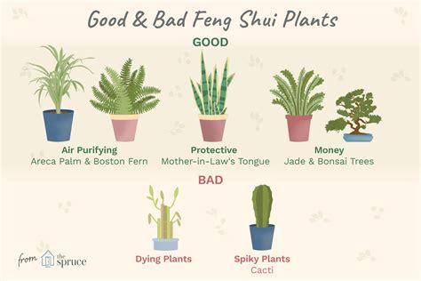 good  bad feng shui plants