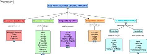 imagenes mapa mental del cuerpo humano aparatos del cuerpo humano