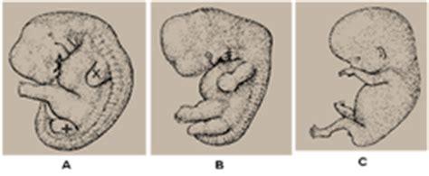 pattern formation limb bud appendicular skeleton development of human skeletal system