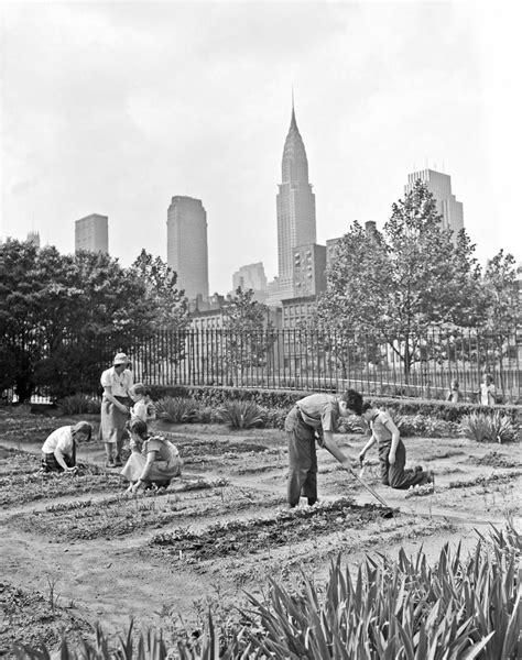 history   victory gardens