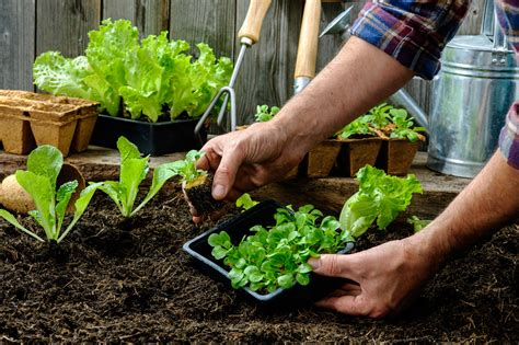 Your Guide To Starting A Vegetable Garden Vegetable Garden Starter Plants