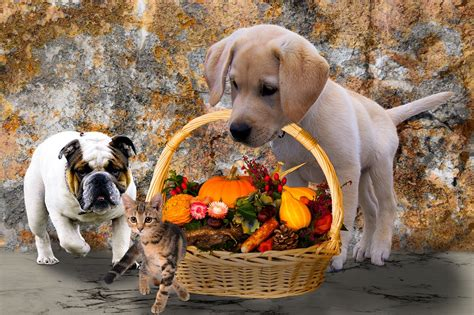 how much pumpkin to give a puppy is pumpkin safe for dogs and cats how much can i give them your pet
