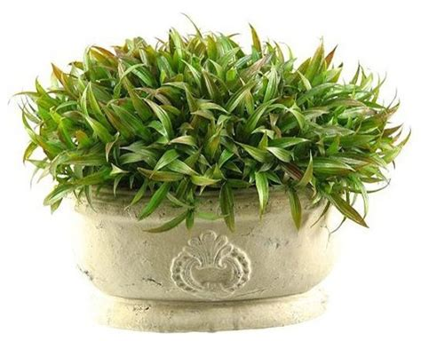 Indoor Grass Planters by Grass In Ceramic Planter Traditional Indoor Pots And Planters