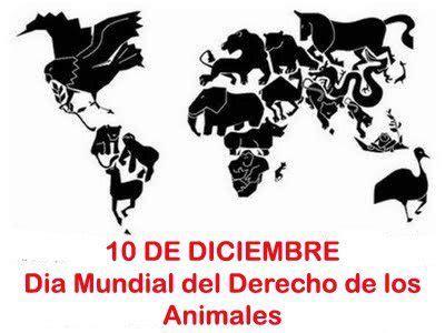 animal respect tattoo d 237 a internacional de los derechos de los animales