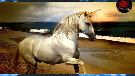 imagenes de unicornios bebes reales graban un unicornio en francia oxlackcastro youtube