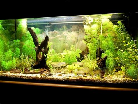 how to create the home aquarium business insider