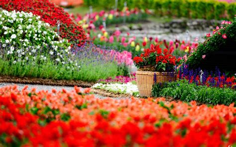 Images Garden Flowers Flowers Garden Hd Wallpapers Free For Desktop Hd Wallpaper