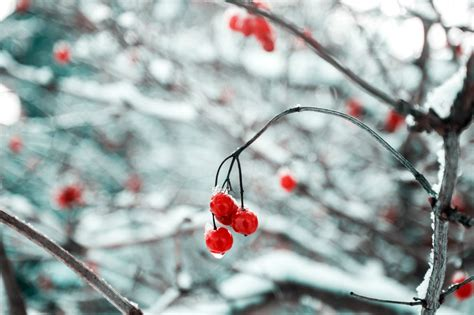 images of christmas season pausing this holiday season to savor the gift of life