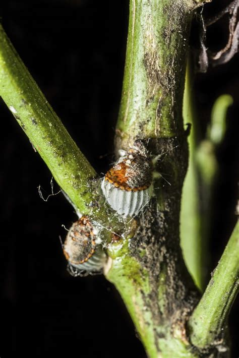 r fruit flies harmful the types of pests on orange trees with pictures ehow