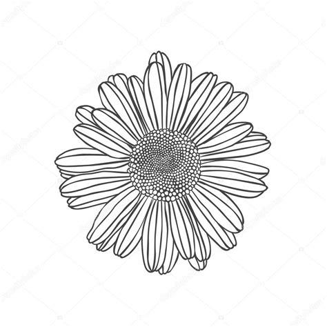 fiore della camomilla fiore della camomilla illustrazione di incisione