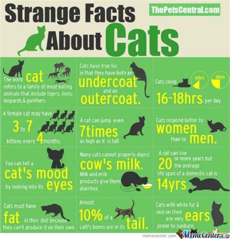 Cat Facts Meme - cat facts by le mao meme center