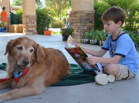 golden retriever rescue dfw reading with moose at merriman park lake highlands