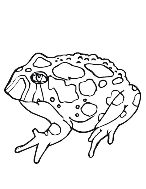Coloring Pages Frogs And Toads | free printable toad coloring pages for kids