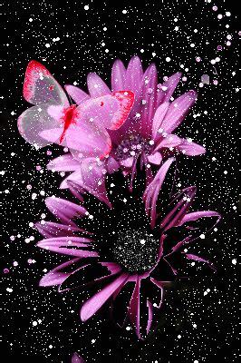 farfalle e fiori immagine fiori e farfalle 126689445 blingee