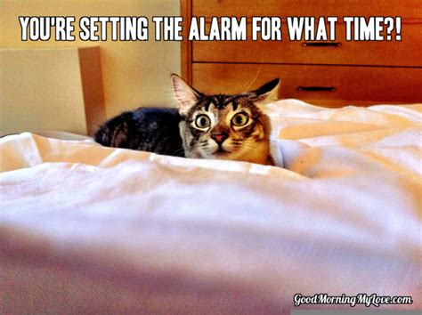 Cute Good Morning Meme - cute and funny good morning memes huffpost