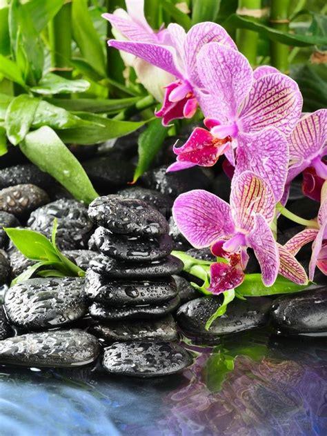 Stiker Cbu Japan zen basalt stones and orchid with dew stock photo