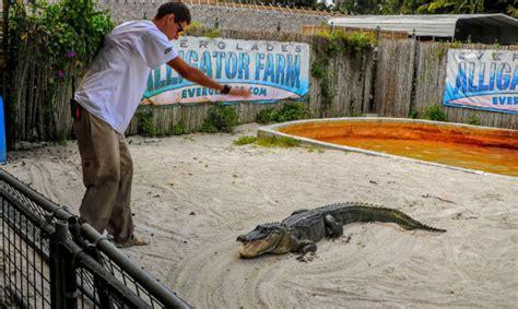 airboat price everglades alligator farm prices