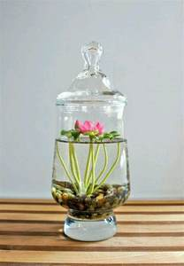 How To Grow A Lotus Flower Indoors Diy Cactus Terrariums