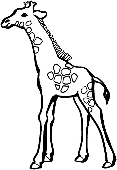 giraffe habitat coloring pages free giraffe coloring pages