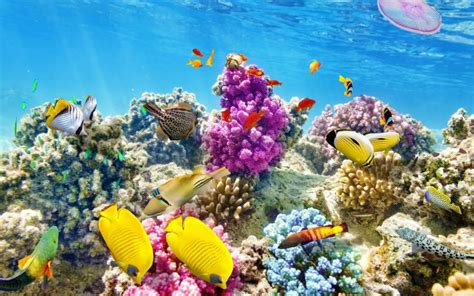underwater themes for windows 10 fish and corals theme for windows download pureinfotech