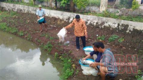 Benih Cendana dinas perikanan oku tebar 9 000 benih ikan cendana news
