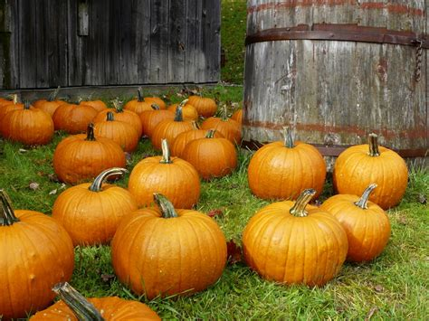 pumpkins wallpaper images pumpkins pumpkins everywhere hd