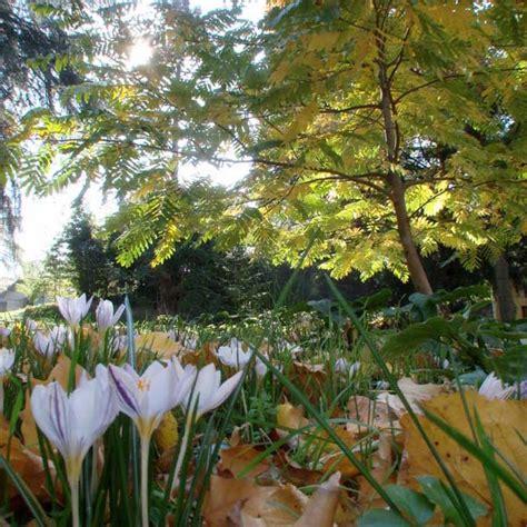 il giardino dei semplici firenze il giardino dei semplici enjoy firenze
