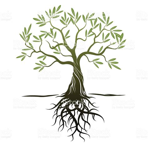 vector color olive tree with green leafs and roots stock