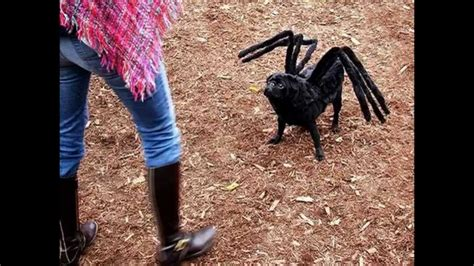 spider costume for dogs more mutant spider costume for sale beds and costumes