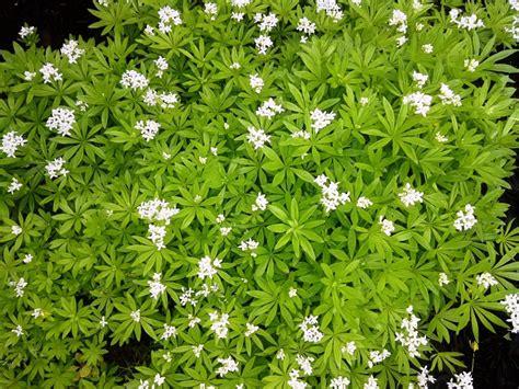 Garage Floor Paint Designs best flowering ground cover ideas