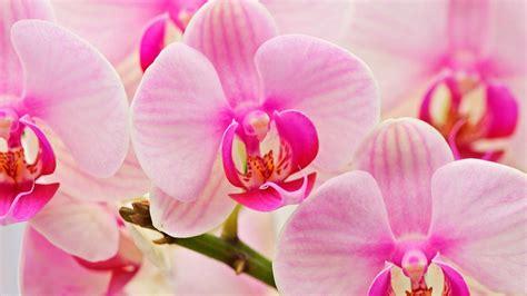 Blume Mit Weißer Blüte by Die 52 Besten Hintergrundbilder Der Natur Blumen Und