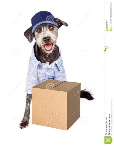 how to deliver puppies happy delivering package stock photo image 63267226