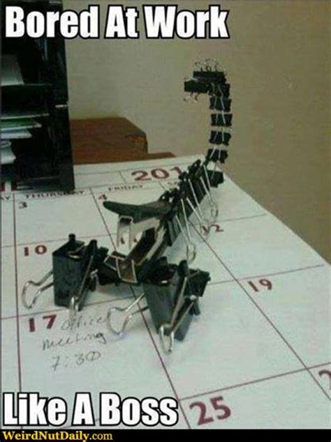 Video Clip Memes - funny pictures weirdnutdaily binder clip scorpion