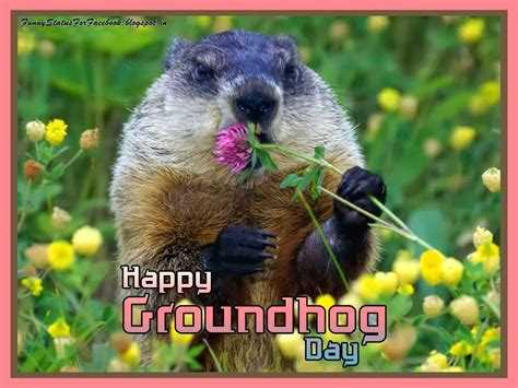 groundhog day saying groundhog birthday quotes quotesgram