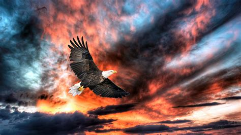 wallpaper in free download pictures of beautiful birds hd wallpapers free download