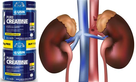 creatine kidneys evidence that creatine is safe to the kidneys by