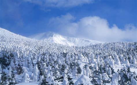 trees snow snow trees 1680 x 1050 forest photography miriadna