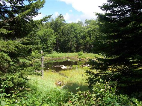 vt section 8 meadow and small pond near south alder brook taken at