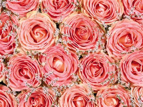 imagenes flores impresionantes rodeado de flores impresionantes fondos de escritorio 18